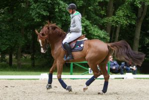 Chestnut Horse Warmup Training Scenes by LuDa-Stock