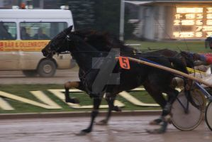 Trot Racing Horse 003 by Hetti-Photograph