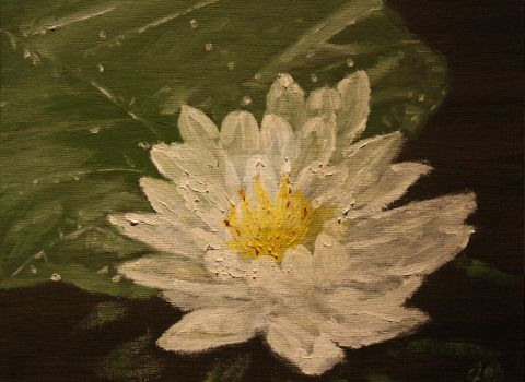 Water Lily 1 by JosephJODonnell