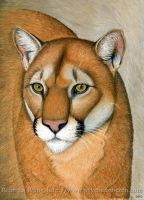 Cougar Portrait by rebeccawangart