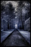Let's walk through forests... by zardo