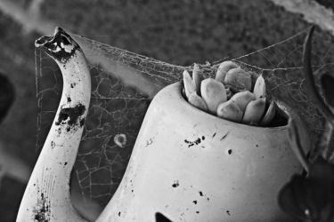 Old Teapot And Spiderweb by EdPreece