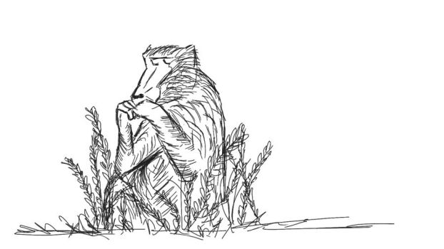 babboon by nadinedavid