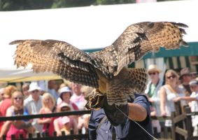 Eurasian Eagle Owl Stock 3 by LRG-Photography
