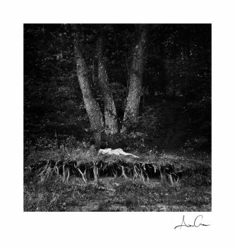 roots by AncaCernoschi
