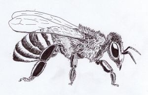 Bee by Jalipuchi