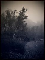 Into the fog... by DafoeofLenin