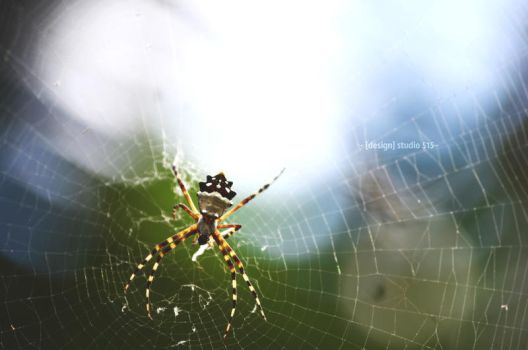 Spider in the light by 515D