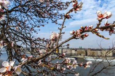 Spring in Budapest by Aqualoop31