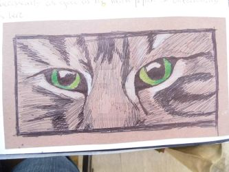 Cats eyes by IWillLickYoFace