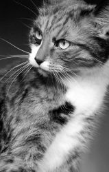 Chatte 2 by MissAbsurd