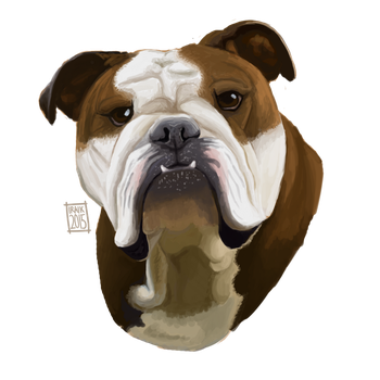 English Bulldog by Iraik