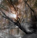 Misterious woods I by incisler