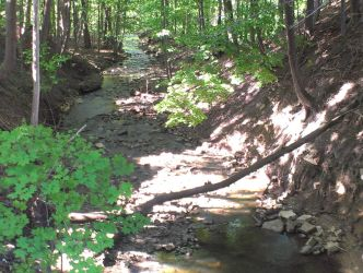 North view of stream to Black creek. by Android-shooter