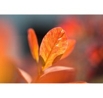 Almost Autumn Wallpaper Pack by Ythor