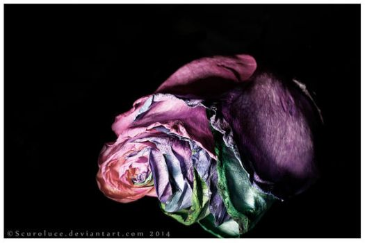 Roses aren't red by scuroluce