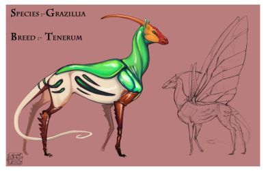Grazillia Tenerum by Teggy