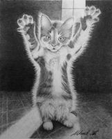 Hands up, little fluffy cat! by Udvardi