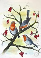 Three Robins by socallow