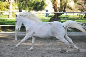 Galloping Pony Stock by upandy