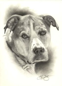 Hombre Dog Drawing by golfiscool