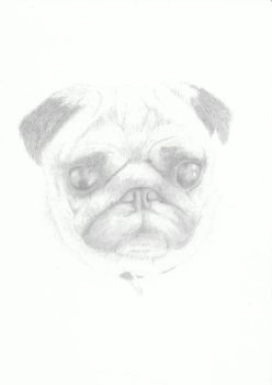 harley the pug  by bazza09