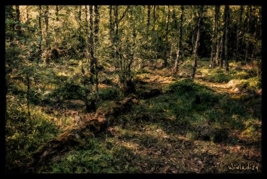 The forest by wiwaldi24