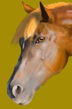 My first realistic horse face-This is old as heck by LuminaMaridia
