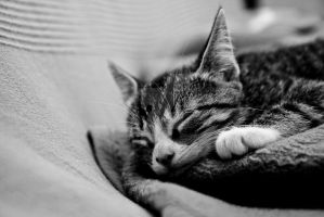 Willi the Cat by robert-from-berlin