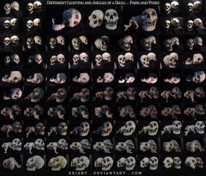 Different Angles of a Skull - Pairs and Poses by AshenCreative