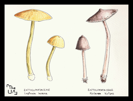 Dangerous Mushrooms 10 by TheUnconfidentArtist