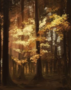 Study of light and leaves by primepalindrome