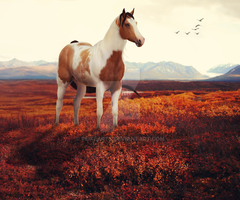 Like a Painted Wild Mustang by PeikeArts
