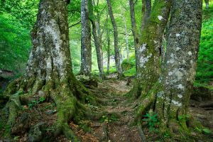 Ancient Forest by FlorentCourty