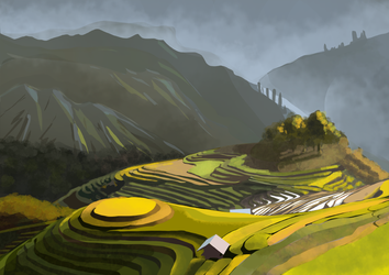 Rice field study by T-ry