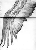 Fang's Wings by AlexRider-00Nothing