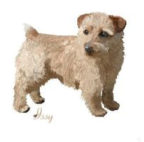 Norfolk Terrier On MS Paint by igloomuffin