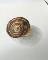 Shell by DaisyDeddle