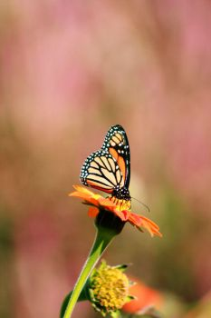 Flutter By by Mylares
