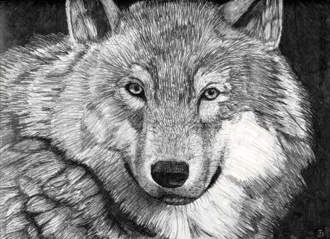 Complete Wolf Pencil Drawing by EagleTheCheetah