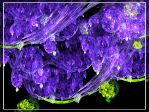 Wisteria by white-bamboo