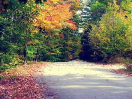 Maine foliage road by sataikasia
