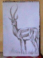 2013 drawing - deer by nielopena