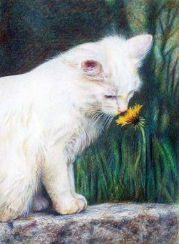 Cat with Flower by balloonfactory