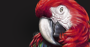 Red Macaw by Lahvorre