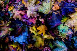 Leafs 2 by bulgphoto