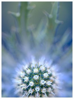 Mystic Thistle by signmeupscotty