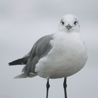 Hello Seagull by FriendFrog