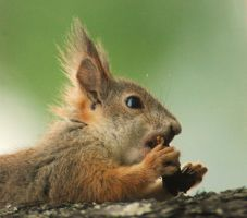 A Squirrel by th3beatles