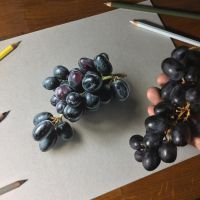 My drawing of black grapes by marcellobarenghi